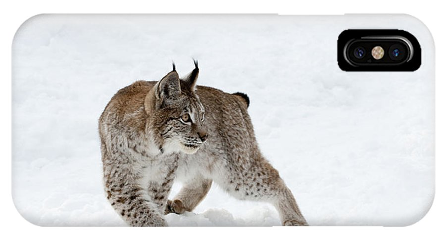 Lynx IPhone X Case featuring the photograph On High Alert by Sandra Bronstein