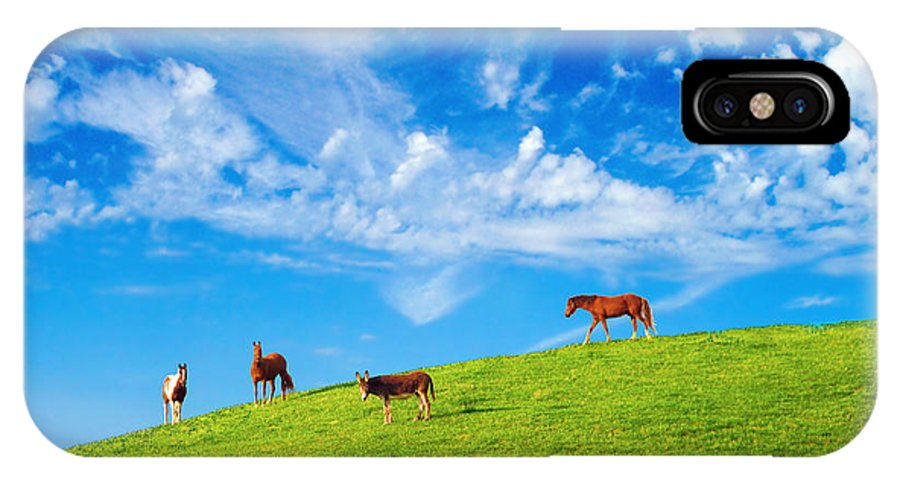 Horse IPhone X Case featuring the photograph On Top Of The Hill by Francesa Miller