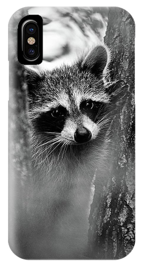 Racoon IPhone X Case featuring the photograph On Watch - Bw by Christopher Holmes