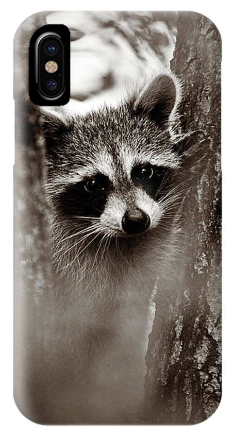 Racoon IPhone X Case featuring the photograph On Watch - Sepia by Christopher Holmes