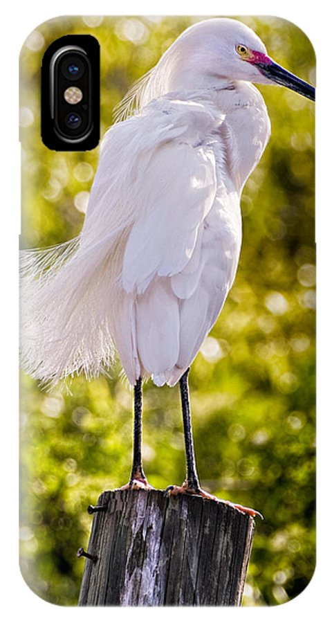 snowy Egret IPhone Case featuring the photograph On Watch by Christopher Holmes