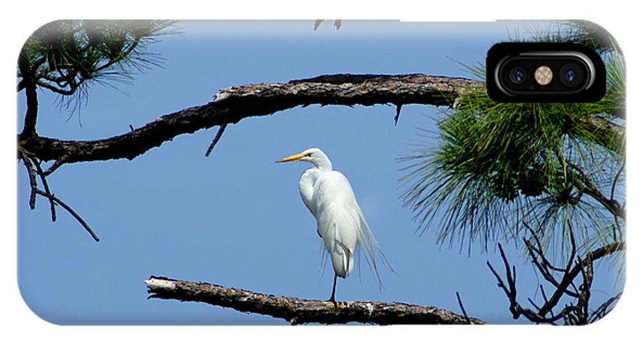 Bird IPhone X Case featuring the photograph One Leg Perch - Debbie May by Debbie May