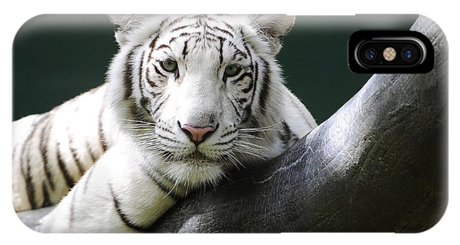 White Tiger IPhone X Case featuring the photograph One Of Those Days by Keith Lovejoy