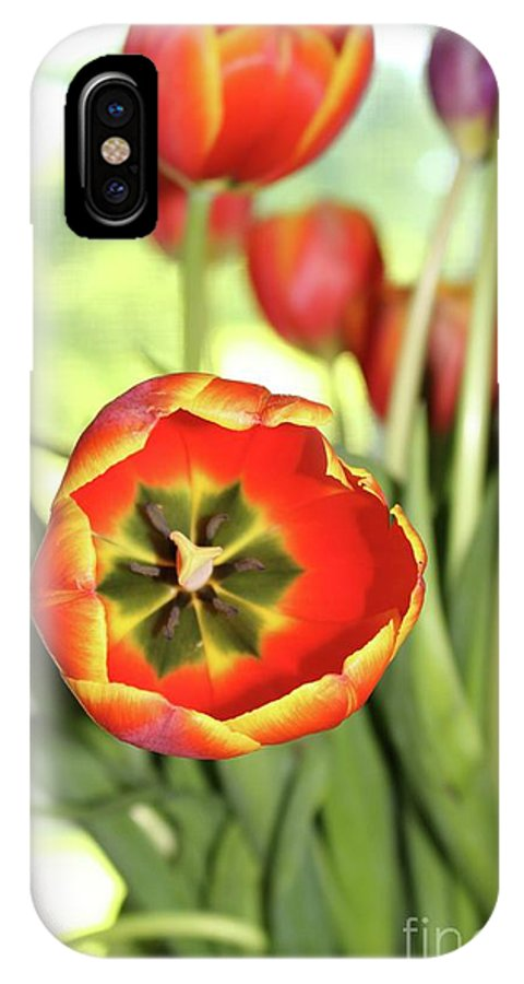 Tulip IPhone X Case featuring the photograph Open Tulip by Brenda Ackerman