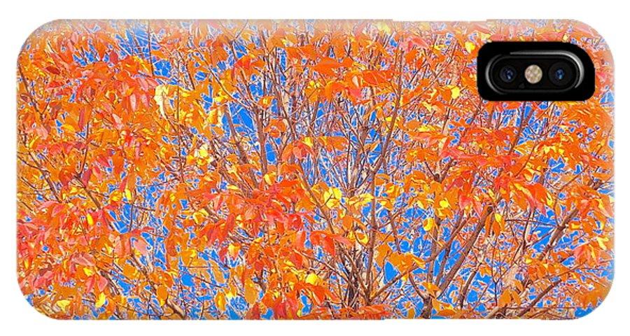 Orange IPhone X Case featuring the photograph Orange Autumn Impression by Wendy Yee