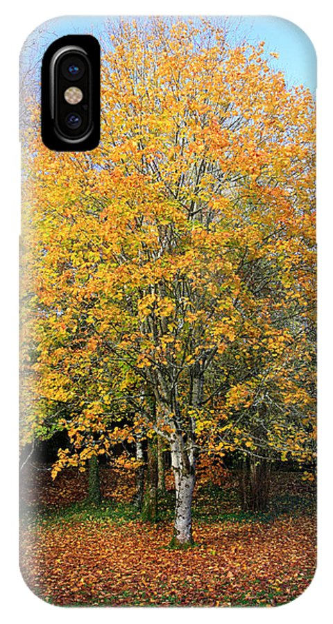 Orange IPhone X Case featuring the photograph Orange Autumn Tree by Pierre Leclerc Photography