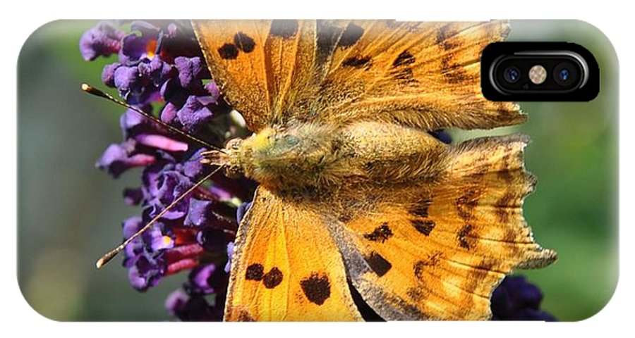 Butterfly IPhone X Case featuring the photograph Orange Beauty by Eduard Meinema