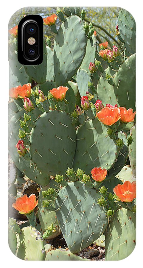 Cactus IPhone X Case featuring the photograph Orange Blossom Cactus by Aimee L Maher ALM GALLERY