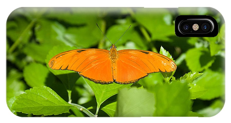 Orange IPhone X Case featuring the photograph Orange Butterfly by Douglas Barnett