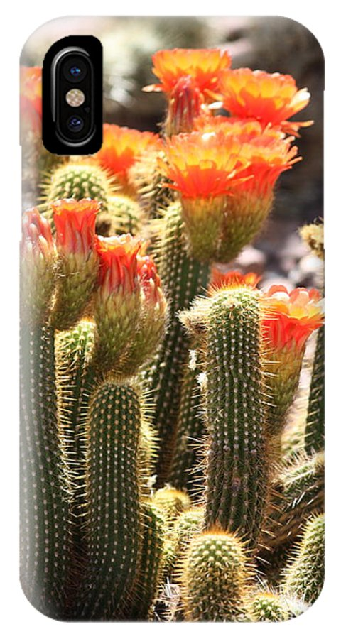 Orange Flowers IPhone X Case featuring the photograph Orange Cactus Blooms by Carol Groenen