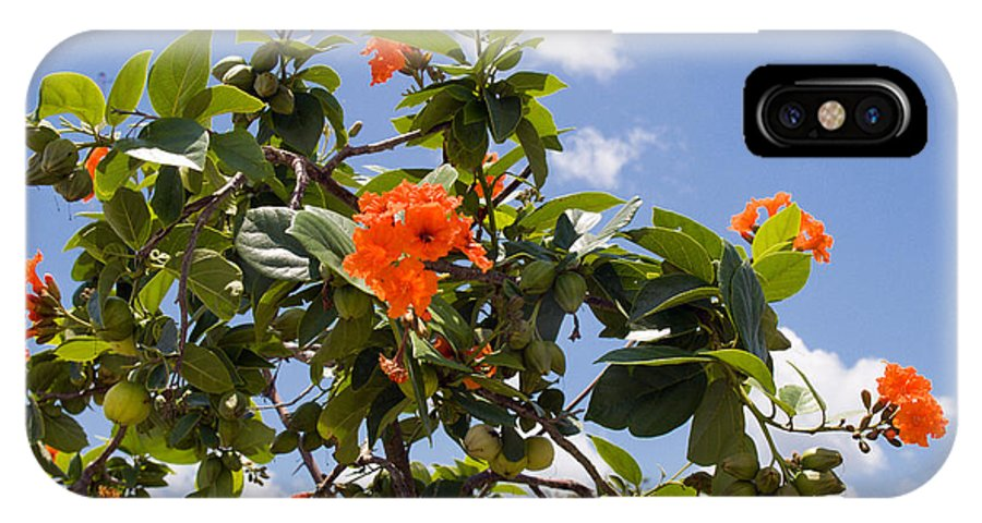 Hibiscus; Rosasinensis; Rosa; Sinensis; Rosa-sinensis; Tree; Bush; Shrub; Plant; Flower; Flowers; Fl IPhone X Case featuring the photograph Orange Hibiscus With Fruit On The Indian River In Florida by Allan Hughes