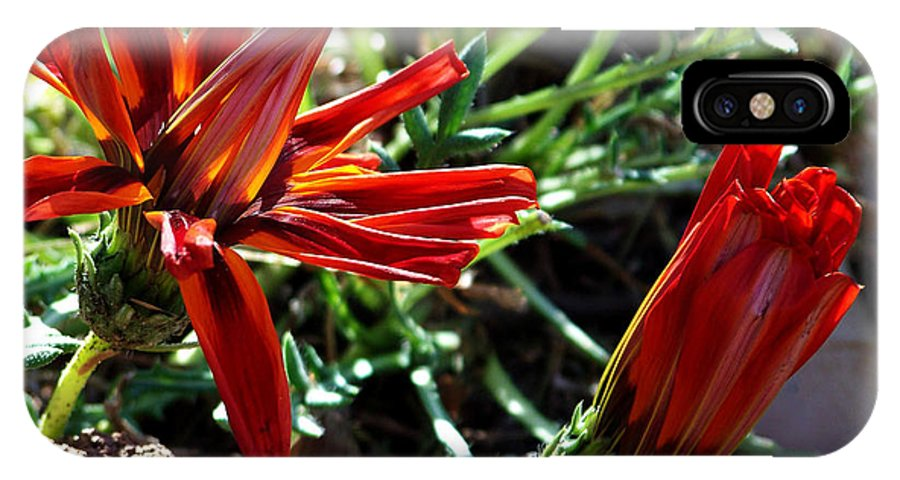 Gazania IPhone X Case featuring the photograph Orange Power by Kathy McClure