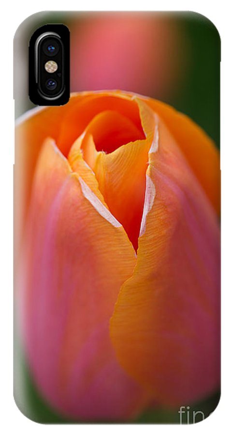 Flowers IPhone X Case featuring the photograph Orange Raspberry Sherbet Tulip by Beverly Tabet