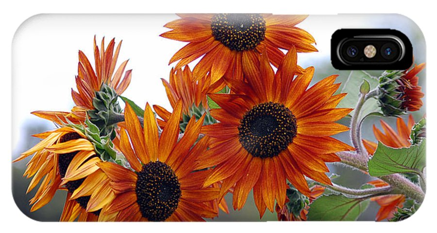 Sunflower IPhone X Case featuring the photograph Orange Sunflower 1 by Amy Fose