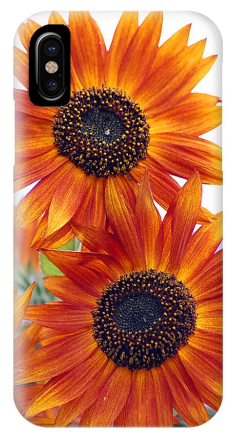 Sunflower IPhone X Case featuring the photograph Orange Sunflower 2 by Amy Fose