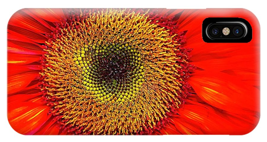 Flora IPhone X Case featuring the photograph Orange Sunflower by Bruce Bley