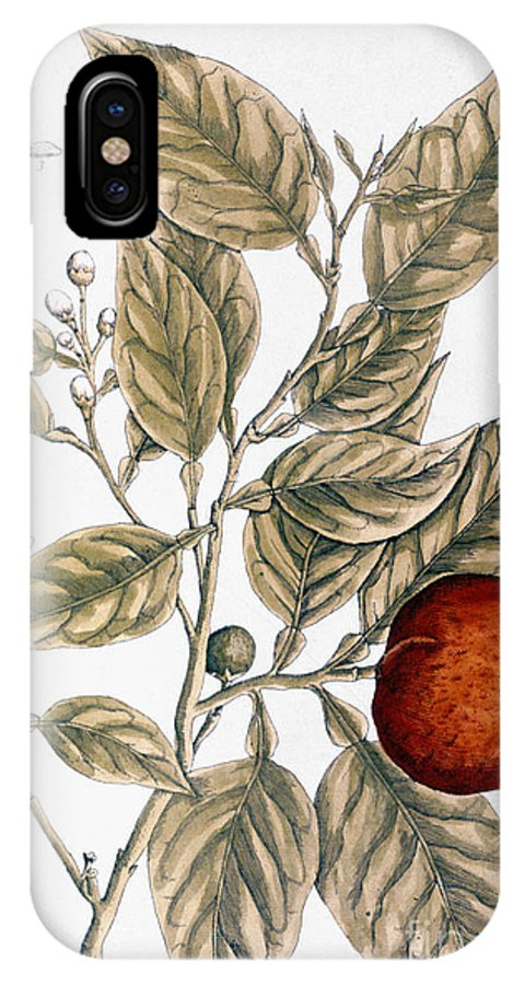 1730s IPhone X Case featuring the photograph Orange Tree, 1735 by Granger