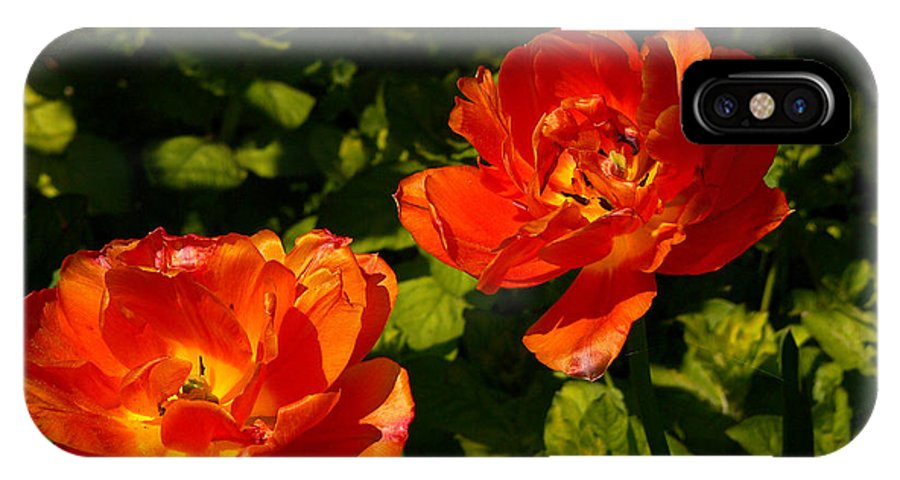 'orange Tulips' IPhone Case featuring the photograph Orange Tulips In My Garden by Helmut Rottler