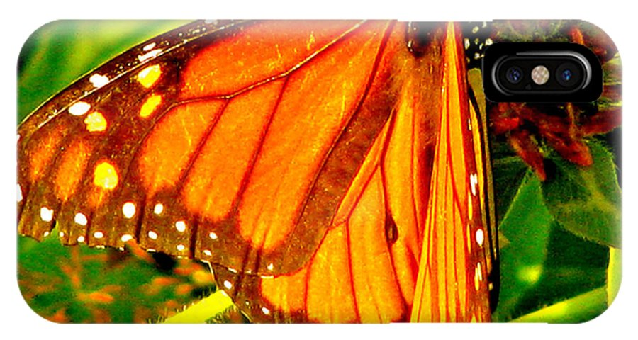 Orange Winged Butterfly IPhone X Case featuring the photograph Orange Winged Butterfly by Debra   Vatalaro