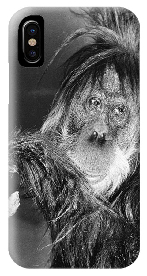 20th Century IPhone X Case featuring the photograph Orangutan by Granger