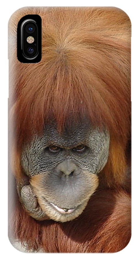 Red Ape Eyes IPhone Case featuring the photograph Orangutan by Luciana Seymour