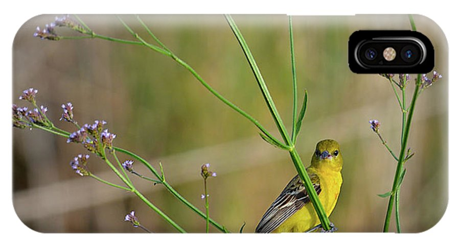 Bird IPhone X / XS Case featuring the photograph Orchard Oriole by Lindy Pollard