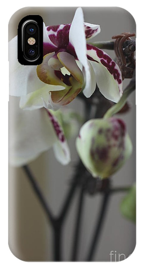 Orchid IPhone X Case featuring the photograph Orchid - 100 by David Bearden