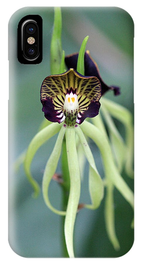 Orchid IPhone X Case featuring the photograph Orchid 10 by Pierre Leclerc Photography