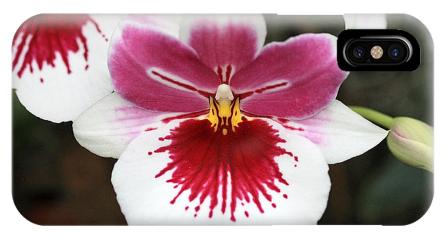 Orchid IPhone X Case featuring the photograph Orchid 3 by Pierre Leclerc Photography