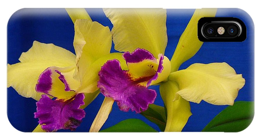 Orchids IPhone Case featuring the photograph Orchid 7 by Peggy King