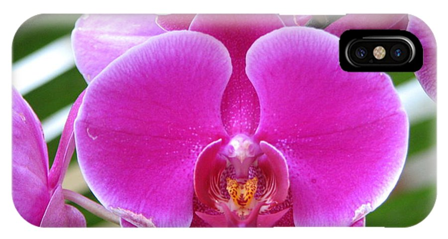 Orchid IPhone X Case featuring the photograph Orchid 8 by David Dunham