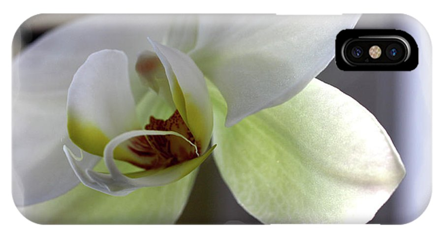 White Orchid IPhone X Case featuring the photograph Orchid for Valentines Day by David Bearden