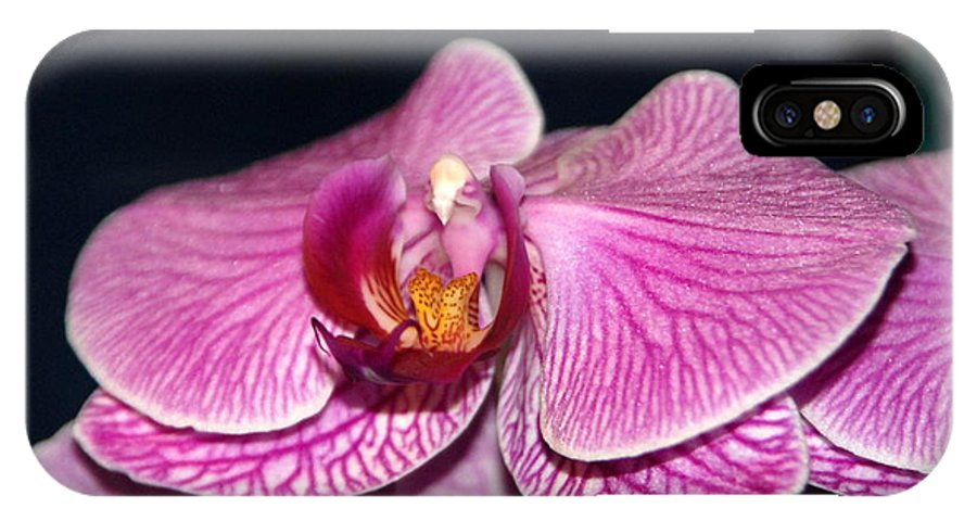 Orchids IPhone X Case featuring the photograph Orchid Orchid by Margaret Fortunato