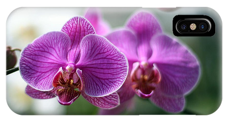 Orchid IPhone X Case featuring the photograph Orchids In Flight by Jack Thomas