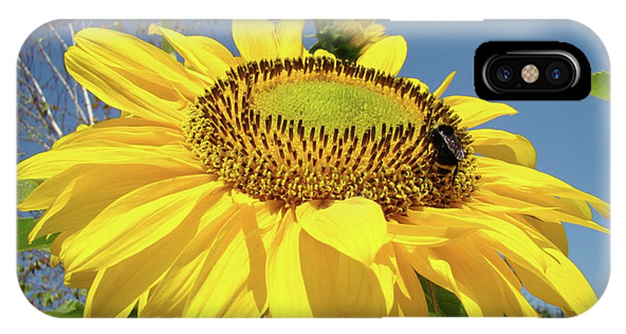 Sunflower IPhone X Case featuring the photograph Oregon Gardens Silverton Sunflower Honeybee Baslee by Baslee Troutman