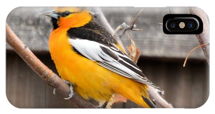 Bird IPhone X Case featuring the photograph Oriole In Colorado by Wendy Fox
