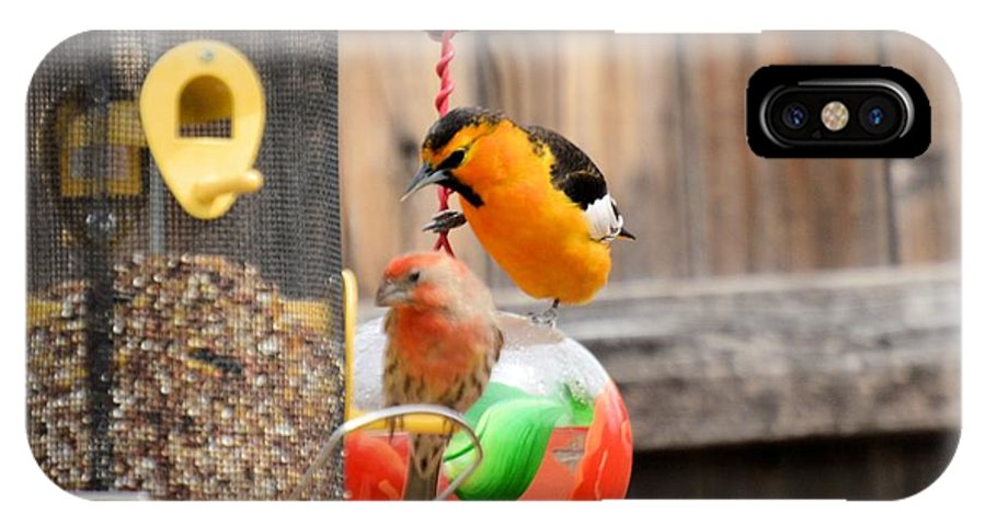 Bird IPhone X Case featuring the photograph Oriole N Finch by Wendy Fox
