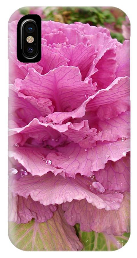 Ornamental Cabbage IPhone X Case featuring the photograph Ornamental Cabbage by Carol Groenen