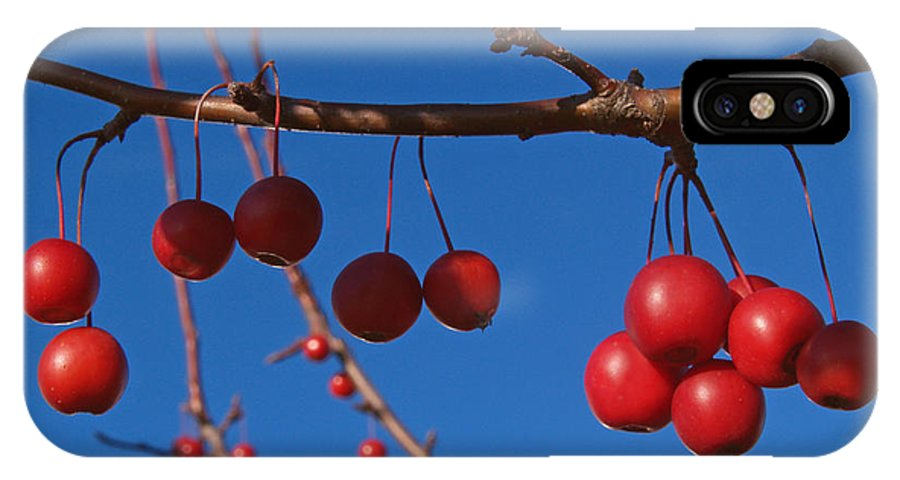 Autumn IPhone X Case featuring the photograph Ornamental Crabapple Branch by Anna Lisa Yoder