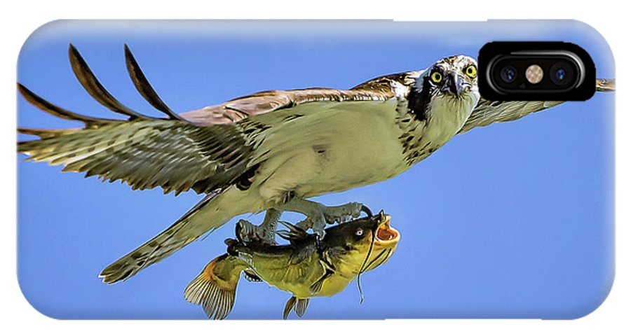 Osprey IPhone X Case featuring the photograph Osprey And Catfish by Monica Hall