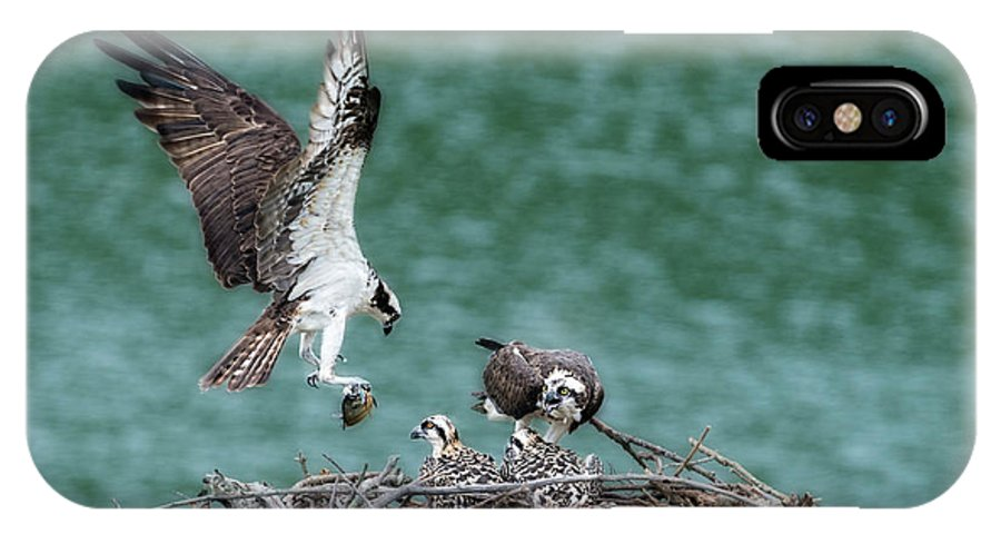 Male Osprey IPhone X Case featuring the photograph Osprey Bringing Fodd To The Babies by Dan Friend