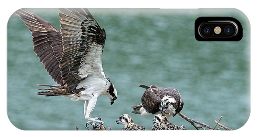 Osprey IPhone X Case featuring the photograph Osprey Male Bring Home The Dinner by Dan Friend