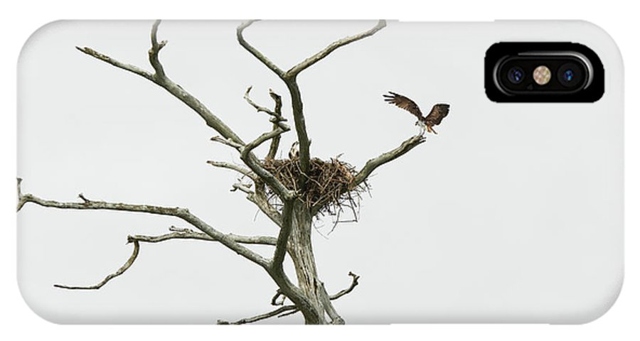 First Landing State Park IPhone X Case featuring the photograph Osprey Nest by MotionOne Studios