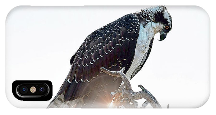 Osprey Silhouette IPhone X Case featuring the photograph Osprey Silhouette by Patti Whitten