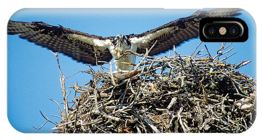 Nature IPhone X Case featuring the photograph Osprey Wingspan by Steve Somerville
