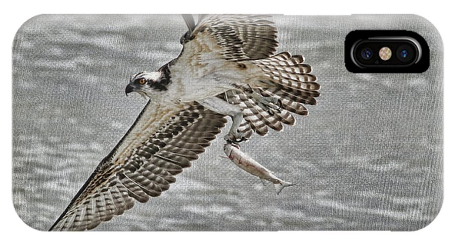 Osprey IPhone X / XS Case featuring the photograph Osprey With Breakfast by Deborah Benoit