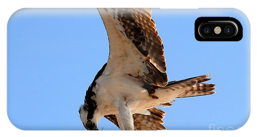 Osprey IPhone X Case featuring the photograph Osprey's Catch by David Lee Thompson