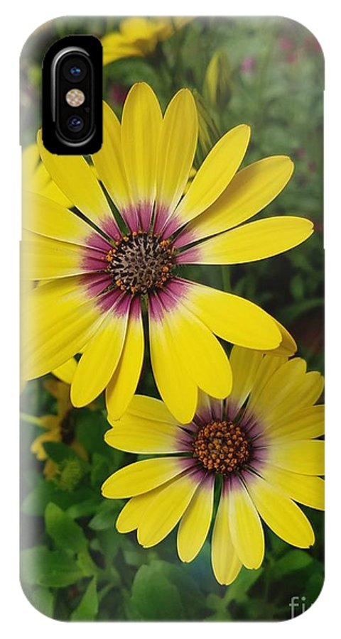 Flowers IPhone X Case featuring the photograph Osteospermum-blue Eyed Beauty by Jane Powell