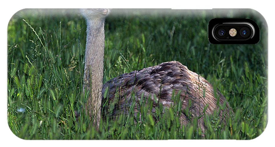 Landscape IPhone X Case featuring the photograph Ostrich Chick by Javier Flores