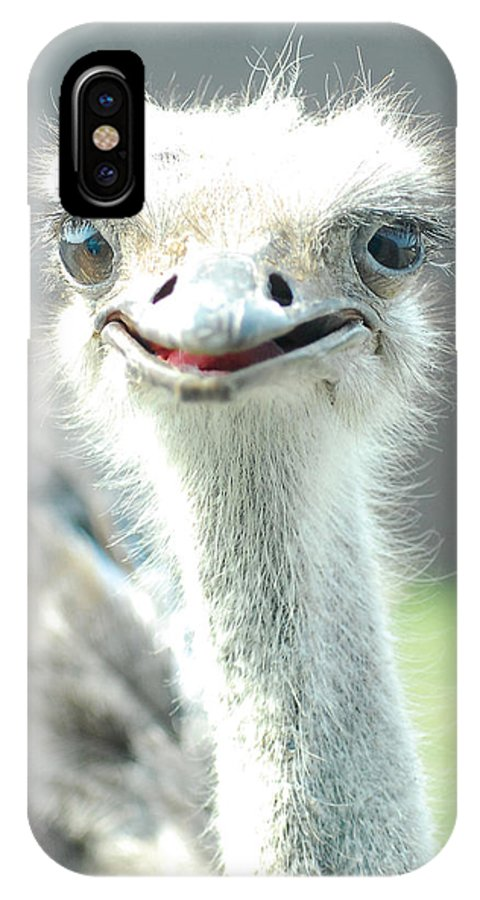 Ostrich IPhone X Case featuring the photograph Ostrich Grin by Steve Somerville